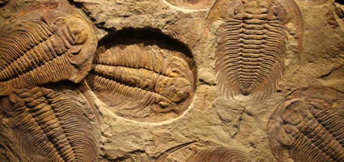 Fósiles Piedra